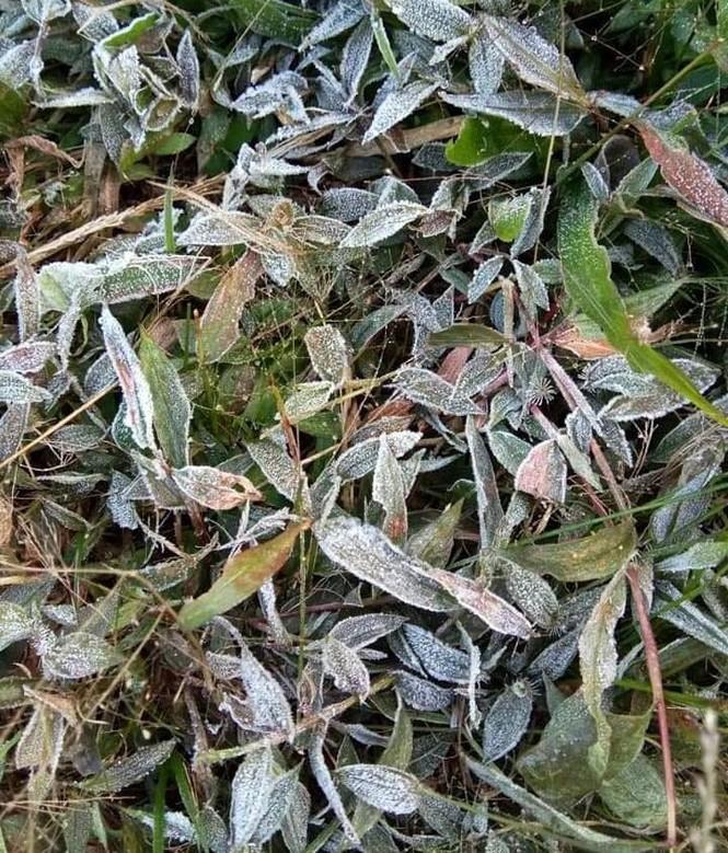 Băng giá phủ kín rừng cây, bãi cỏ ở huyện biên giới Nghệ An - ảnh 5