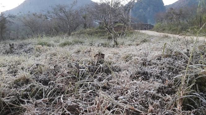 Băng giá phủ kín rừng cây, bãi cỏ ở huyện biên giới Nghệ An - ảnh 4