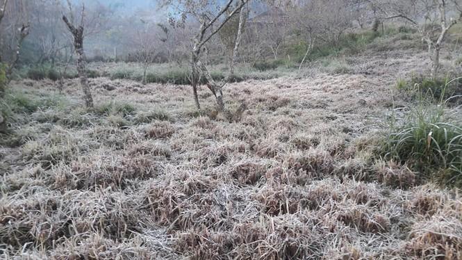 Băng giá phủ kín rừng cây, bãi cỏ ở huyện biên giới Nghệ An - ảnh 6