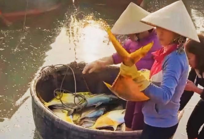 Trúng đậm mẻ cá chim vàng, ngư dân thu về khoảng 600 triệu đồng - ảnh 1