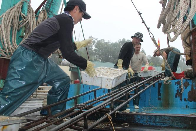 Ngư dân Nghệ An trúng đậm cá trỏng phục vụ thị trường Tết - ảnh 7