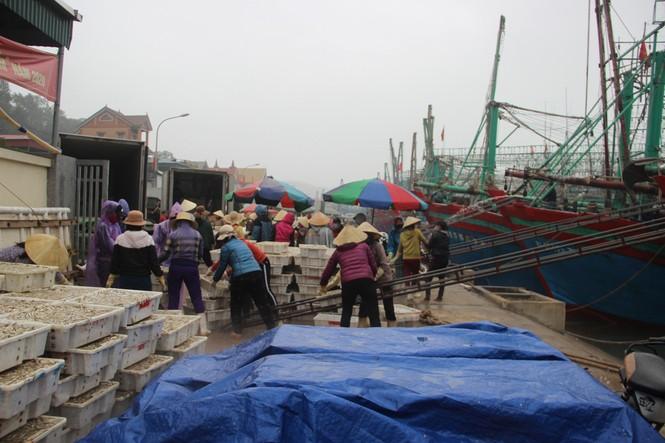 Ngư dân Nghệ An trúng đậm cá trỏng phục vụ thị trường Tết - ảnh 8