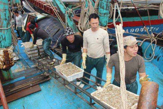 Ngư dân Nghệ An trúng đậm cá trỏng phục vụ thị trường Tết - ảnh 2