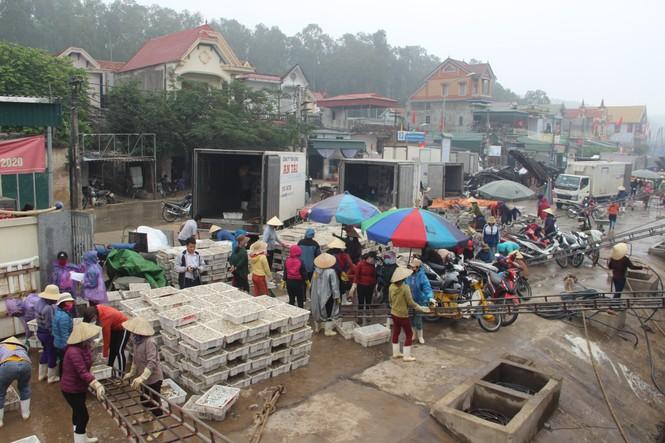 Ngư dân Nghệ An trúng đậm cá trỏng phục vụ thị trường Tết - ảnh 1