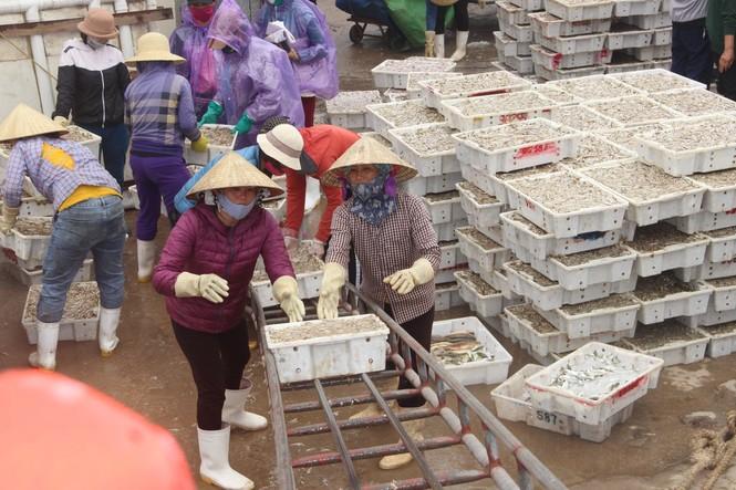 Ngư dân Nghệ An trúng đậm cá trỏng phục vụ thị trường Tết - ảnh 6
