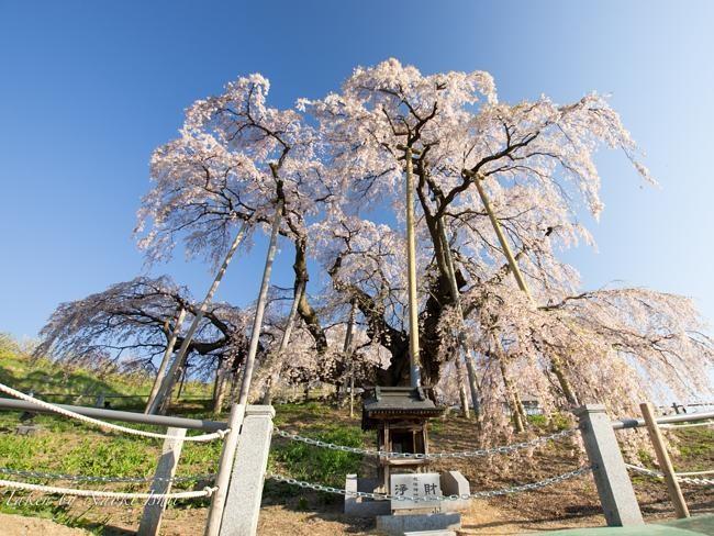 Du lịch Nhật Bản nhộn nhịp trở lại sau sự cố Fukushima - ảnh 4
