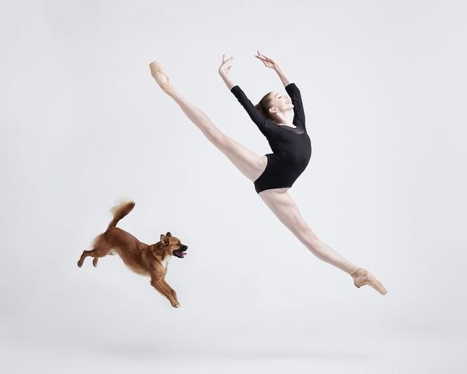 Dàn vũ công ba lê bay bổng tuyệt đẹp cùng những chú chó - ảnh 8