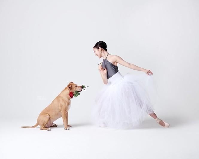 Dàn vũ công ba lê bay bổng tuyệt đẹp cùng những chú chó - ảnh 27