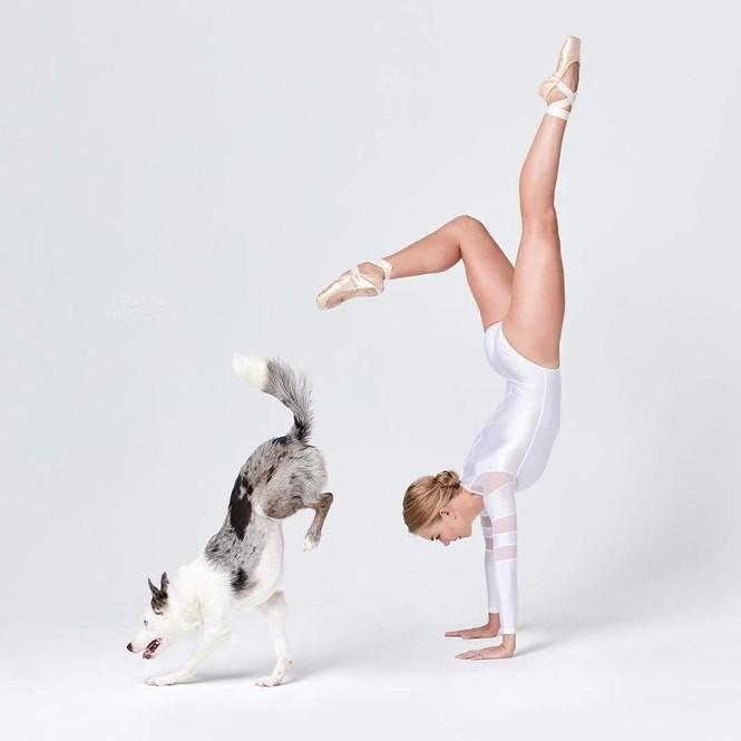 Dàn vũ công ba lê bay bổng tuyệt đẹp cùng những chú chó - ảnh 2