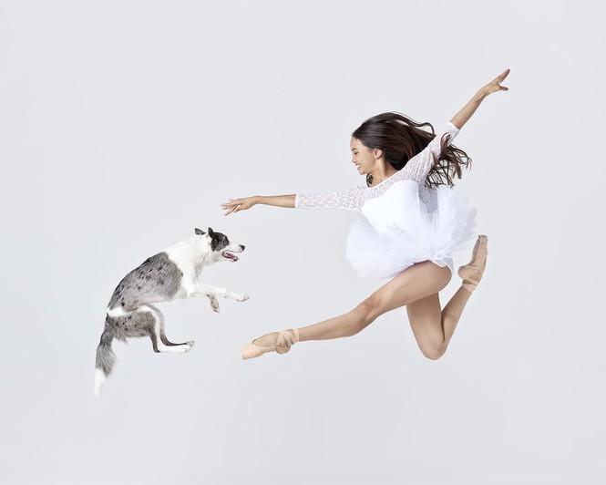 Dàn vũ công ba lê bay bổng tuyệt đẹp cùng những chú chó - ảnh 1