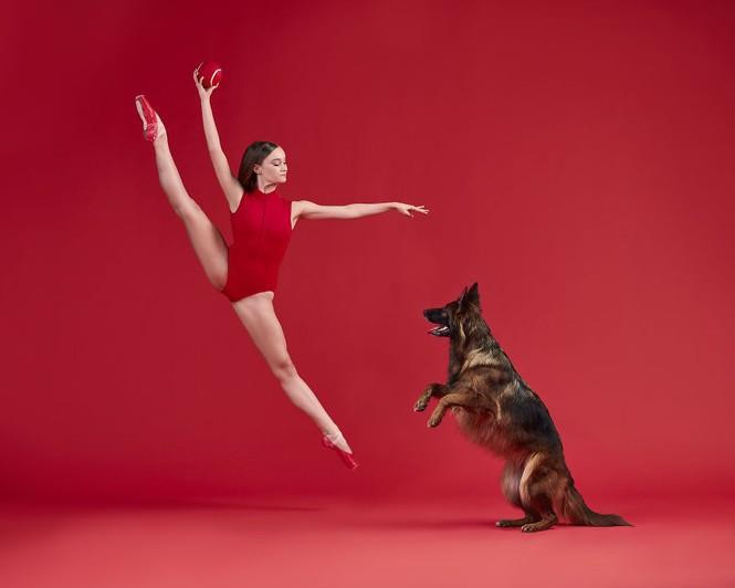 Dàn vũ công ba lê bay bổng tuyệt đẹp cùng những chú chó - ảnh 13