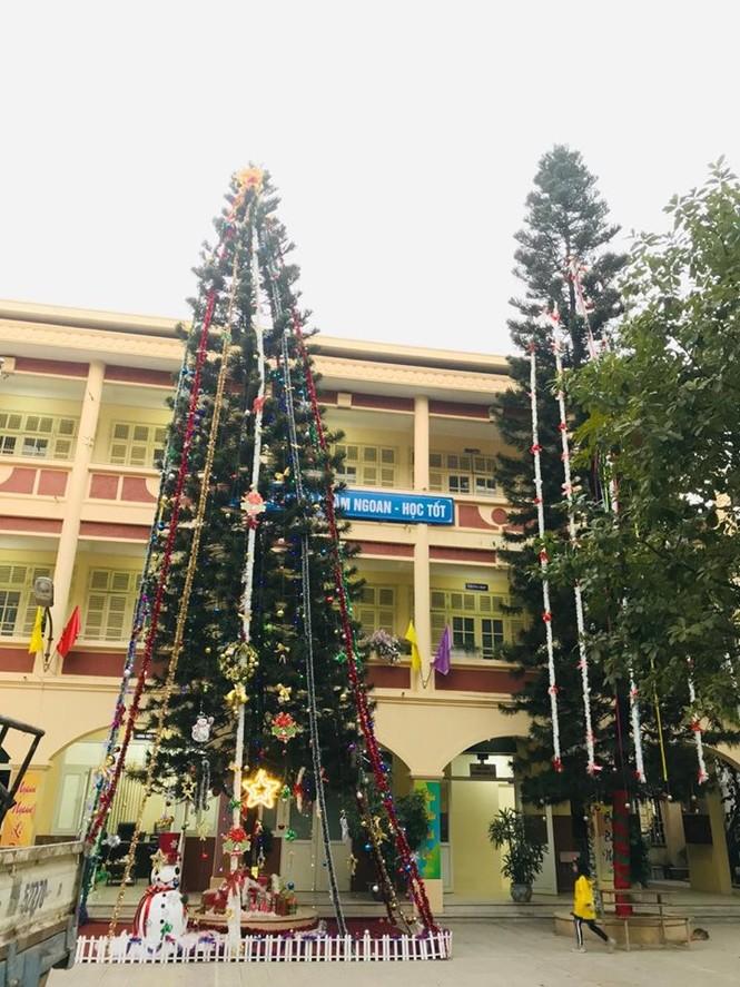 Học sinh háo hức ngắm cây thông 'siêu to khổng lồ' hơn 15m ở Hà Nội - ảnh 2
