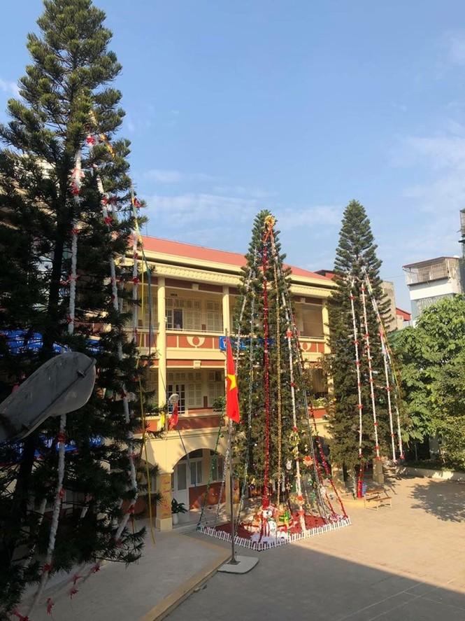 Học sinh háo hức ngắm cây thông 'siêu to khổng lồ' hơn 15m ở Hà Nội - ảnh 1