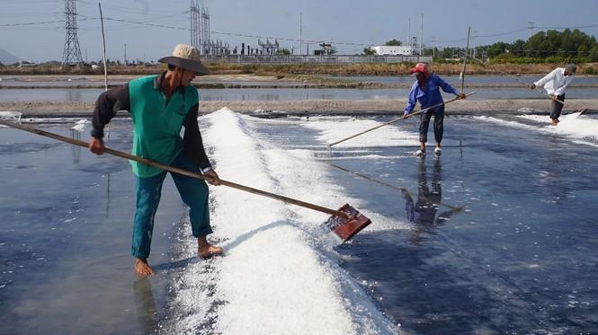 Cận cảnh 'nghề gieo nước biển' đầu năm ở phương Nam - ảnh 6