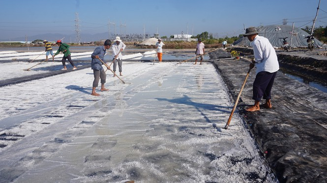Cận cảnh 'nghề gieo nước biển' đầu năm ở phương Nam - ảnh 3