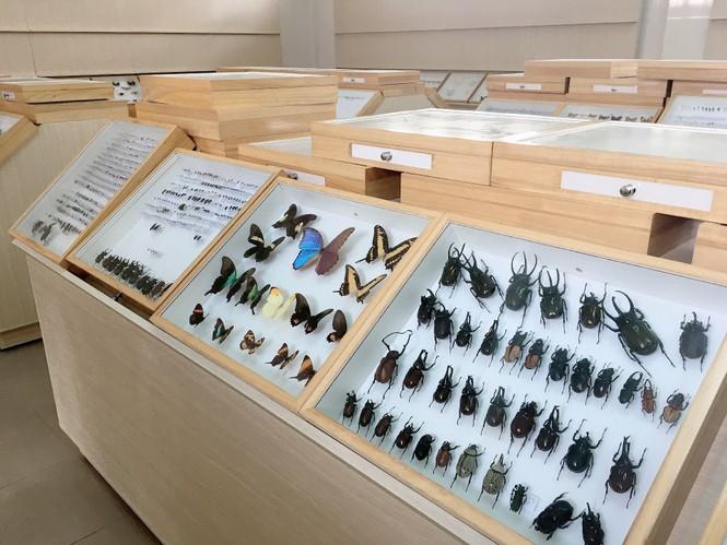 Bảo tàng côn trùng - ảnh 3