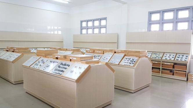 Bảo tàng côn trùng - ảnh 4