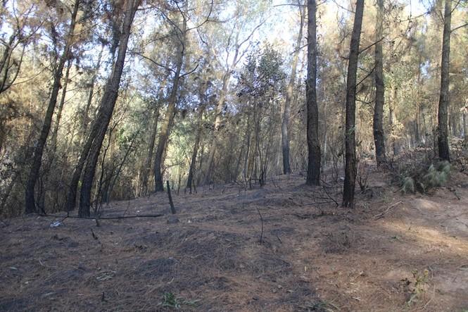 Hình ảnh mới nhất vụ cháy núi Hồng - ảnh 13