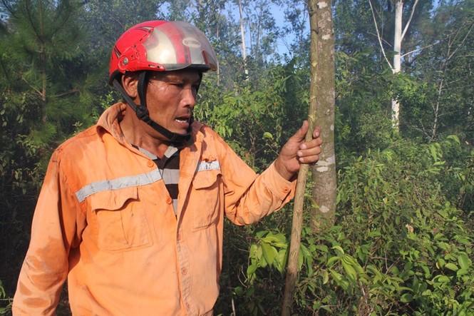 Hình ảnh mới nhất vụ cháy núi Hồng - ảnh 7