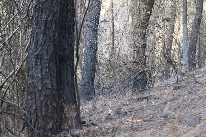 Hình ảnh mới nhất vụ cháy núi Hồng - ảnh 15