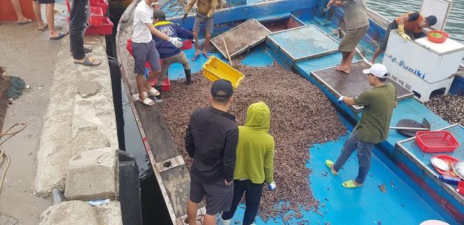 Ngư dân Hà Tĩnh trúng đậm ốc xoắn, sò nhám - ảnh 1