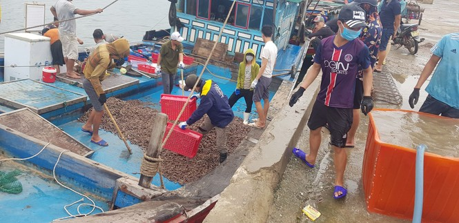 Ngư dân Hà Tĩnh trúng đậm ốc xoắn, sò nhám - ảnh 2