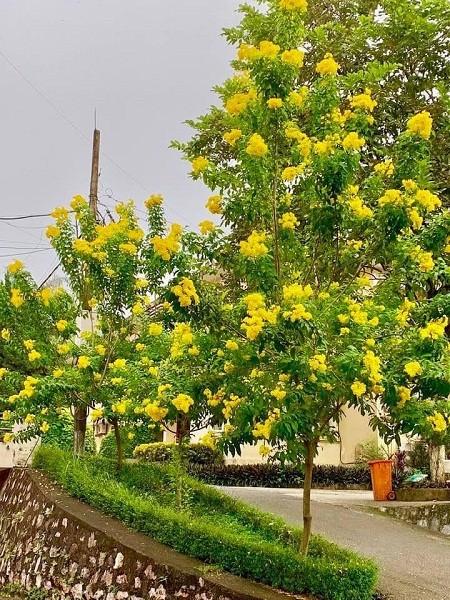 Phát ghen với ngôi trường này, quanh năm đủ loại hoa khoe sắc - ảnh 1
