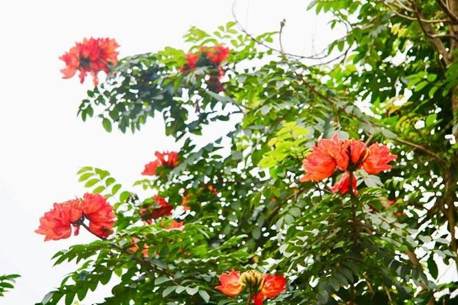 Phát ghen với ngôi trường này, quanh năm đủ loại hoa khoe sắc - ảnh 7
