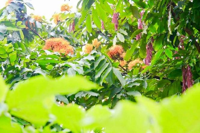 Phát ghen với ngôi trường này, quanh năm đủ loại hoa khoe sắc - ảnh 8