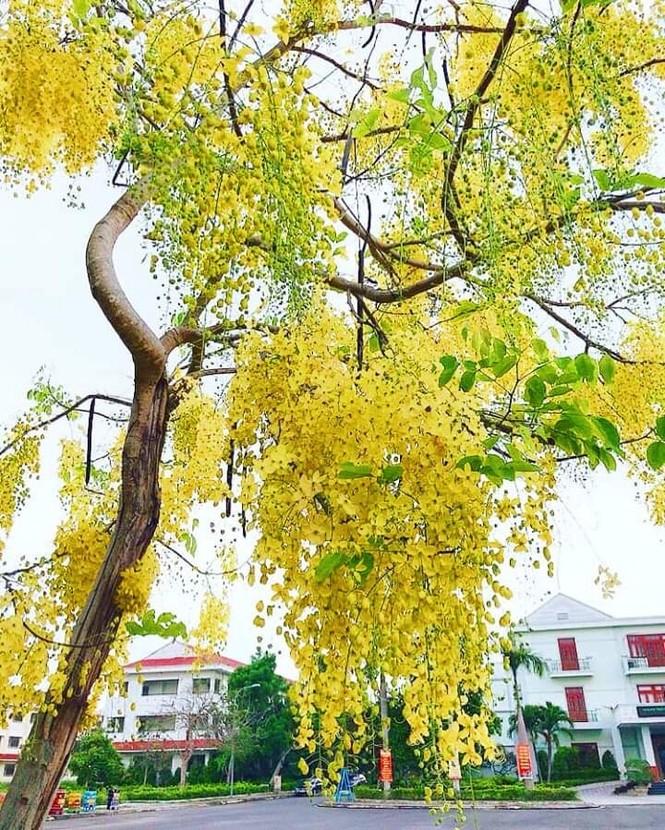 Đến trường ĐH Nội vụ Hà Nội Phân hiệu tại Quảng Nam – Đà Nẵng để học tập, khám phá du lịch - ảnh 15