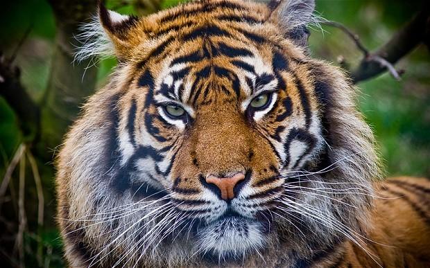 Indonesia: 5 người phải sống trên cây do hổ rình mò bên dưới - ảnh 1