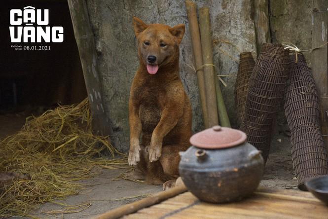 Tất tần tật về vai diễn đặc biệt của chú chó được quan tâm nhất trên màn ảnh rộng Tết 2021 - ảnh 3