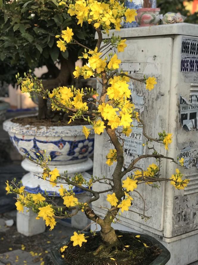 Mai vàng, hoa Tết nhộn nhịp xuống phố - ảnh 11