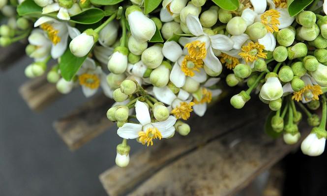 Hoa bưởi dịu dàng về trên phố ngày xuân - ảnh 4