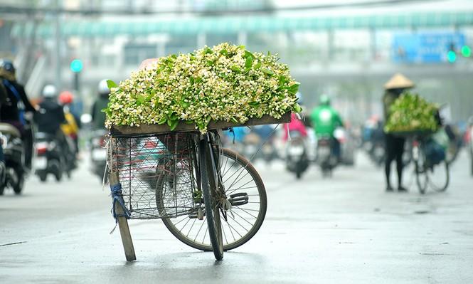 Hoa bưởi dịu dàng về trên phố ngày xuân - ảnh 1