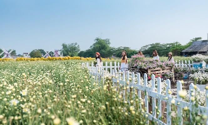 Giới trẻ Hà thành khoe sắc bên vườn hoa cúc họa mi - ảnh 1