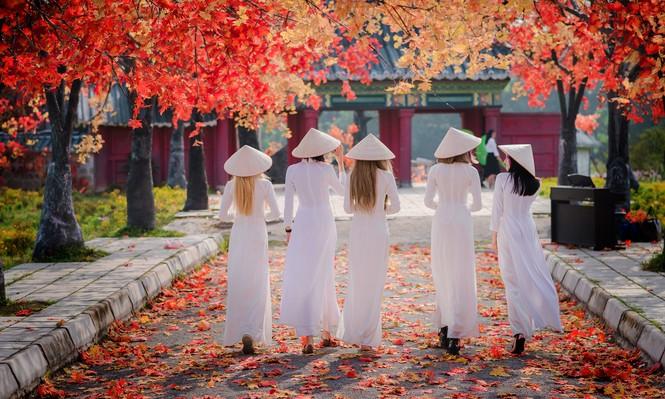 Thiếu nữ phương Tây khoe sắc giữa đồng hoa hoạ mi Hà thành - ảnh 8