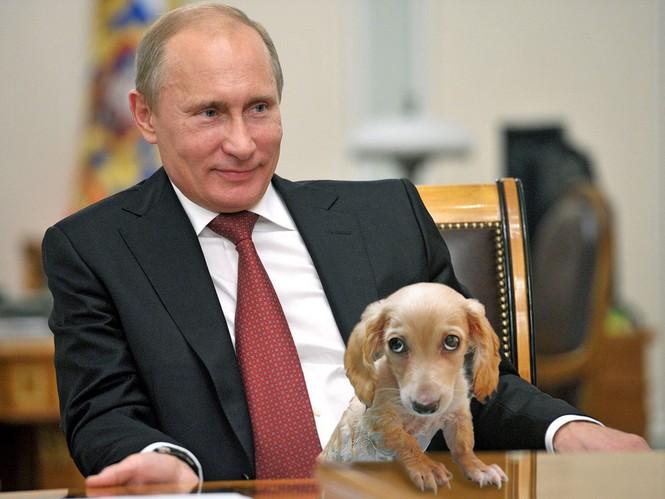 Bé gái nghèo được ông Putin tặng chó husky - ảnh 2