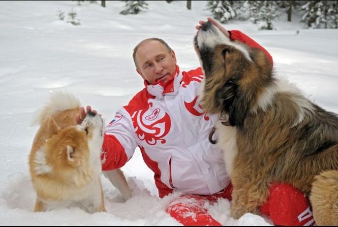 Bé gái nghèo được ông Putin tặng chó husky - ảnh 1