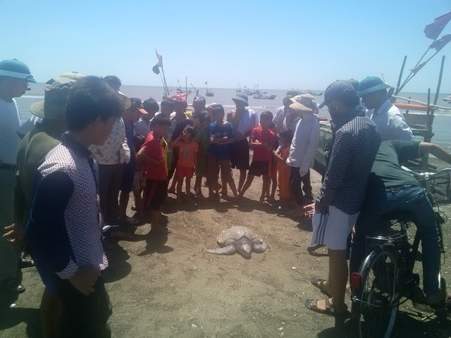 Ngư dân bắt được rùa biển quý hiếm nặng 20kg - ảnh 1