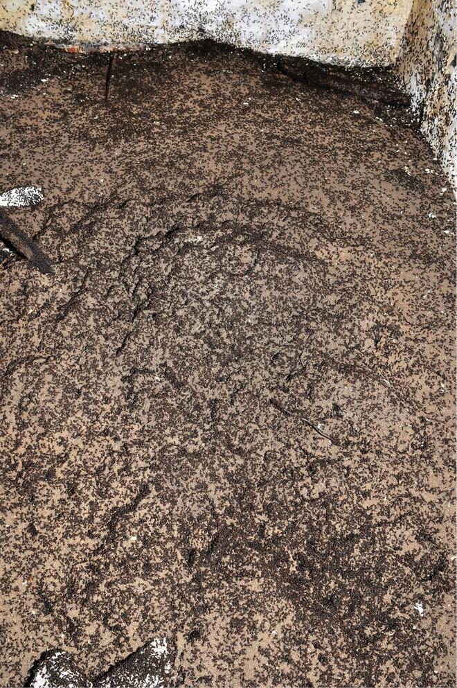 Bốn triệu con kiến bị mắc kẹt dưới hầm hạt nhân thời Liên Xô, chúng đã làm thế nào để sống? - ảnh 1