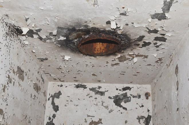 Bốn triệu con kiến bị mắc kẹt dưới hầm hạt nhân thời Liên Xô, chúng đã làm thế nào để sống? - ảnh 3