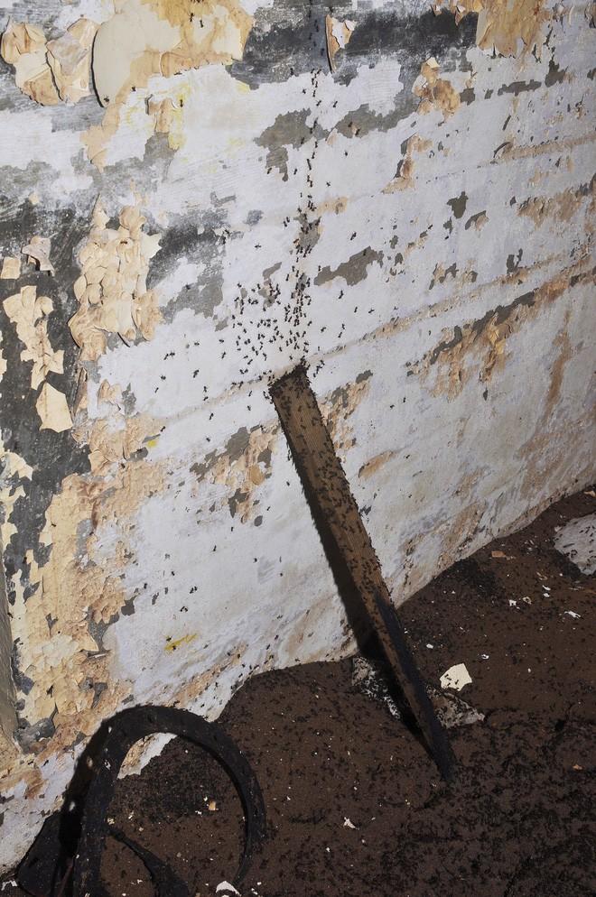 Bốn triệu con kiến bị mắc kẹt dưới hầm hạt nhân thời Liên Xô, chúng đã làm thế nào để sống? - ảnh 4