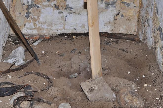 Bốn triệu con kiến bị mắc kẹt dưới hầm hạt nhân thời Liên Xô, chúng đã làm thế nào để sống? - ảnh 6