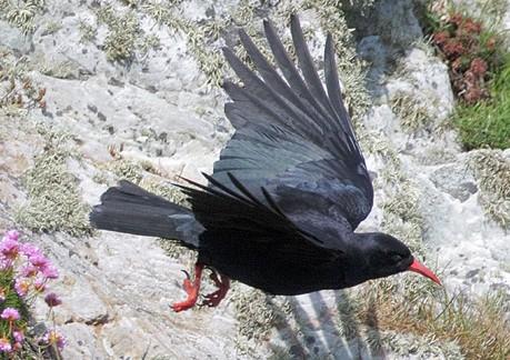 1001 thắc mắc: Quạ là loài chim thông minh nhưng thù dai nhất hành tinh?   - ảnh 2