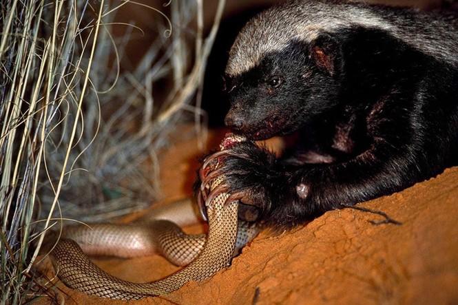 1001 thắc mắc: Những loài vật nào sở hữu 'siêu năng lực' đáng sợ nhất hành tinh? - ảnh 1