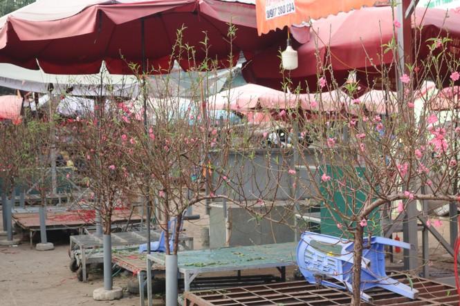Đào Nhật Tân nở sớm, tràn ngập chợ hoa đón Tết Dương lịch  - ảnh 3