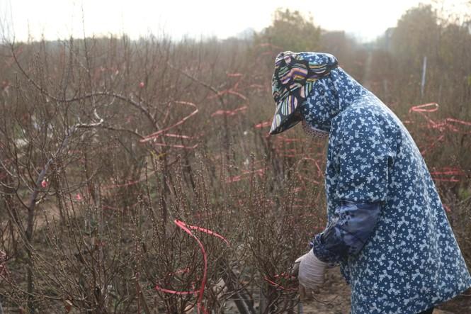 Đào Nhật Tân nở sớm, tràn ngập chợ hoa đón Tết Dương lịch  - ảnh 8