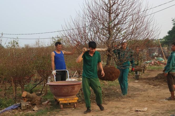 Đào Nhật Tân nở sớm, tràn ngập chợ hoa đón Tết Dương lịch  - ảnh 12