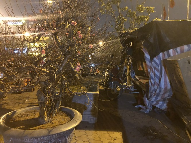 Dân buôn thức trắng đêm 'canh' đào, bưởi  trên vỉa hè Hà Nội - ảnh 15